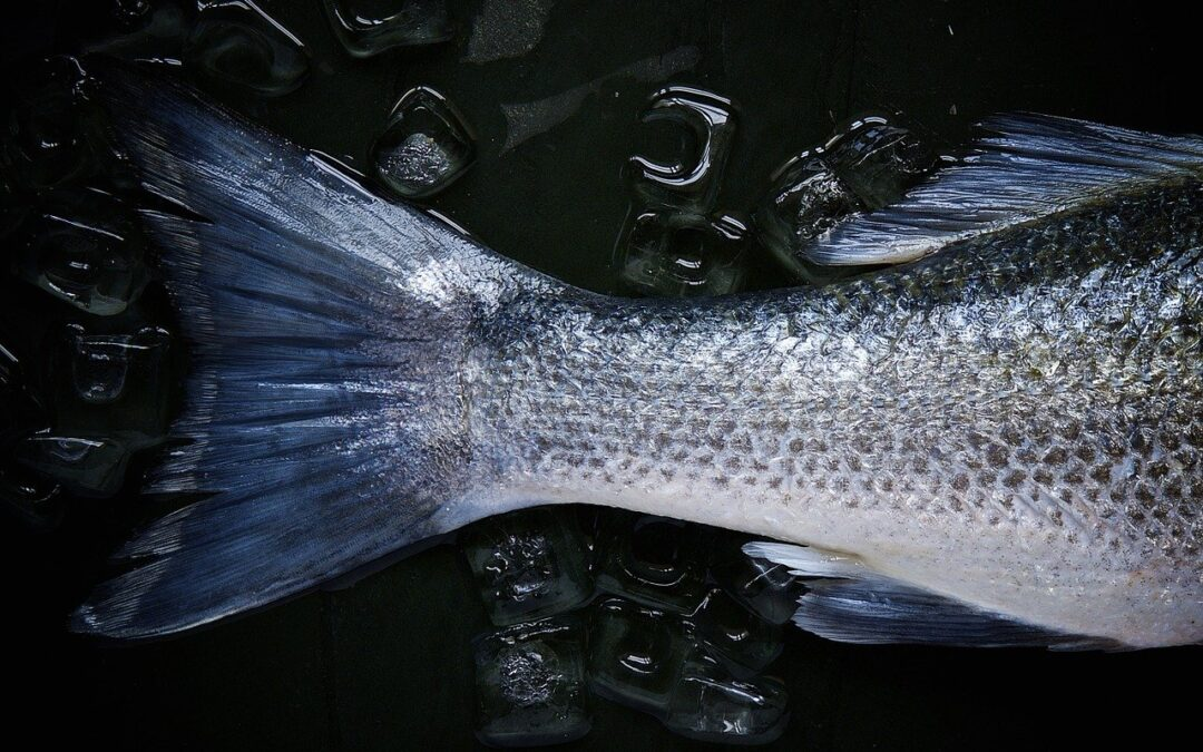 Saltvand vs ferskvandsfisk